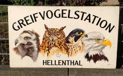 Besuch der Greifvogelstation Hellenthal